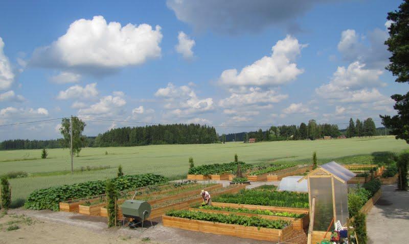Hedelmä ja vihannesviljelijöille EU-korvauksia